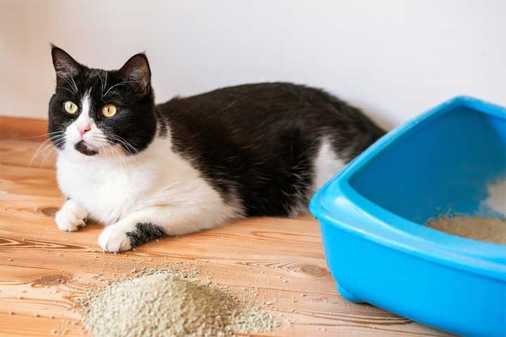 how to get rid of cat urine smell btsa sacramento. Black Bedroom Furniture Sets. Home Design Ideas