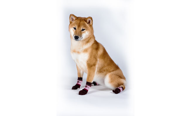 What socks do you get if you are a dog lover